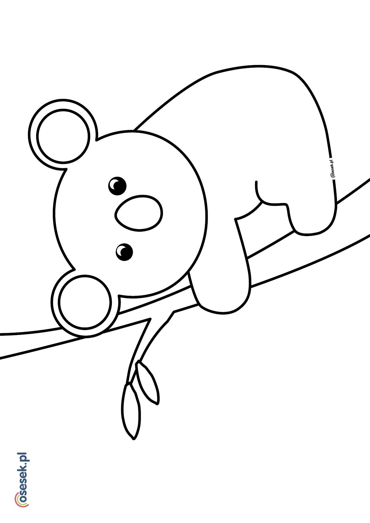 Mis Koala Kolorowanka Dla Dzieci Do Druku Osesek Pl