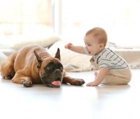 Jak należy przygotować psa na pojawienie się dziecka w domu?