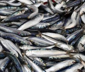 zanieczyszczenia w rybach a płodność