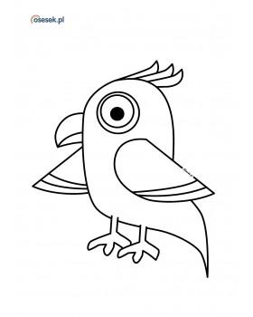 Papuga Arabella