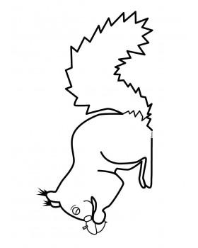 Wiewiórka Ruda Kitka