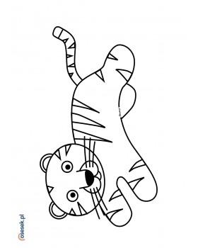 Tygrys Marcel