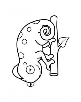 Kameleon Grześ