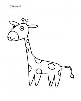 Żyrafa Amelia