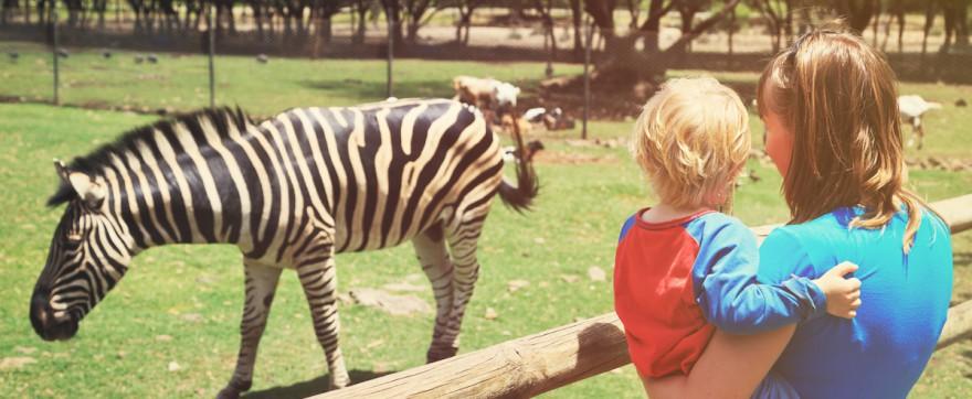 dziecko w zoo