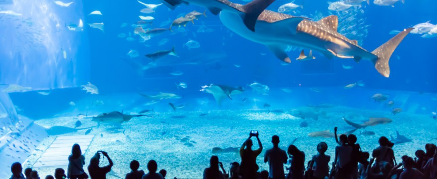 Oceanarium i akwarium z dzieckiem
