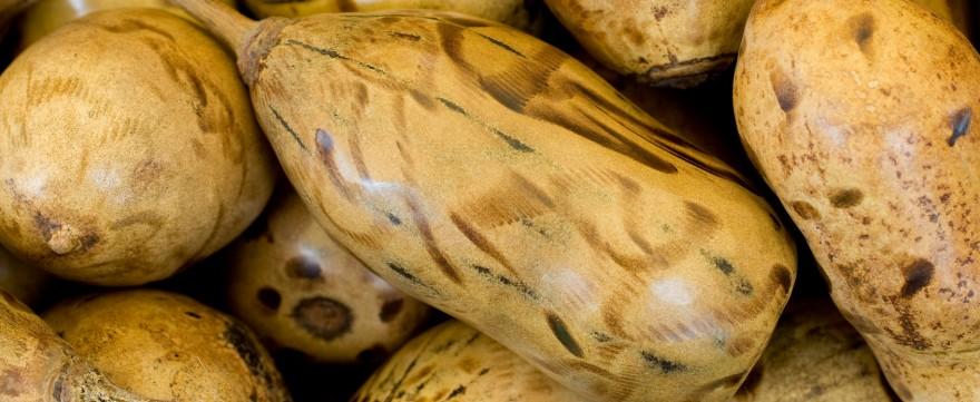 owoc baobabu