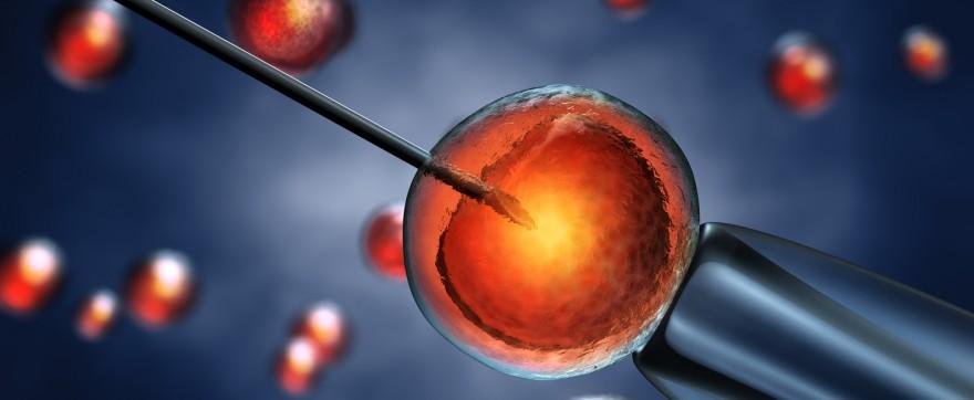 Polacy popierają in-vitro