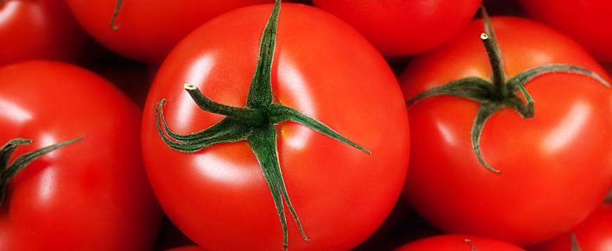 pomidory chronią przed słońcem