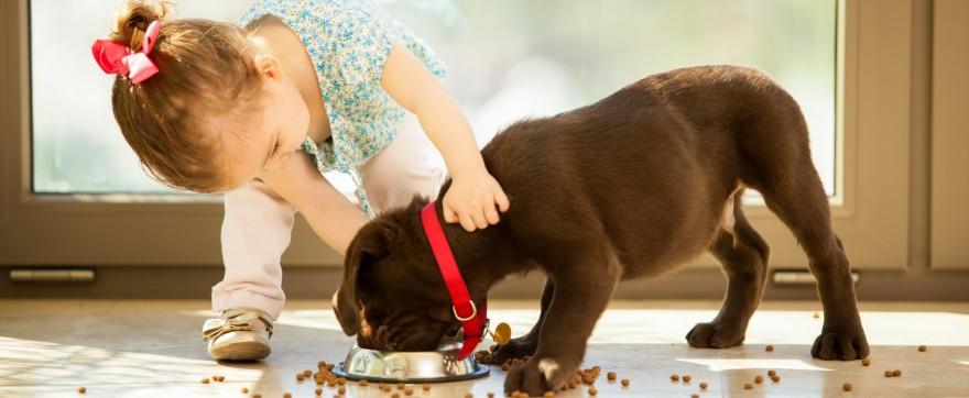 zanim kupisz dziecku psa