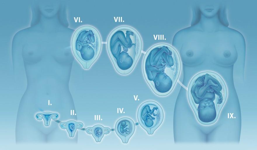 kalendarz ciąży trzeci tydzień ciąży